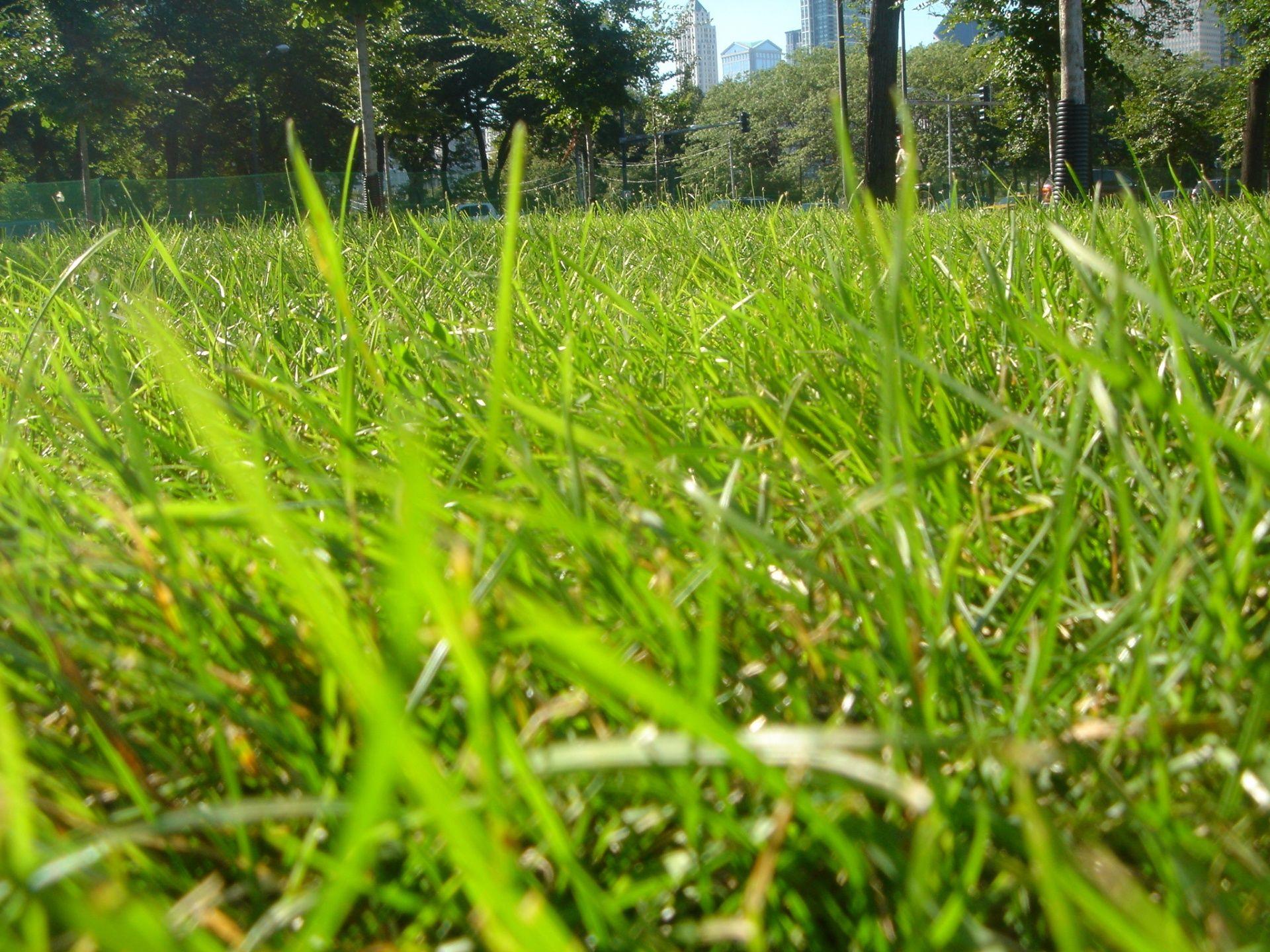 Curso de grama