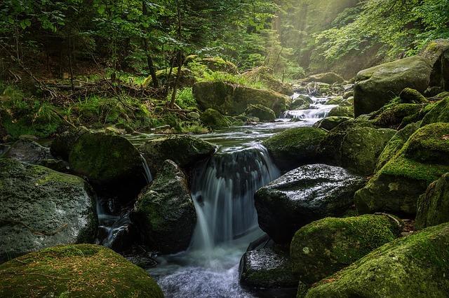 Musgos sobre a pedra na cachoeira
