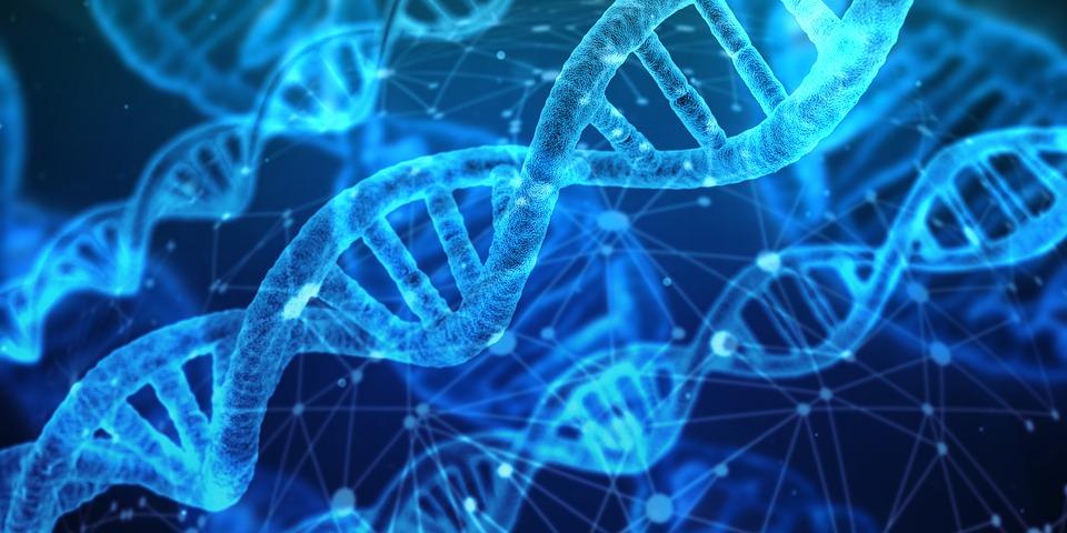 Engenharia Genética: tudo sobe a manipulação dos genes