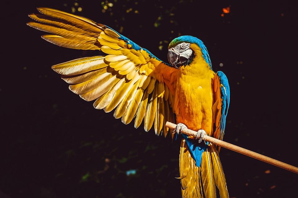 Animais em extinção no Brasil e no mundo!
